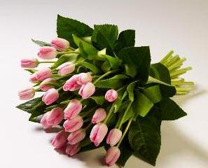 Sheaves Tulip